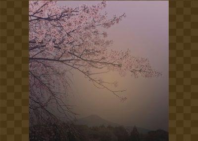 2/25 – 3/10 KAZZ 森下個展 「SAKURA」が咲いた!   愛でるギャラリー祝 MEDEL GALLERY SHU